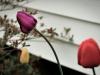 2011-05-21-25190.jpg