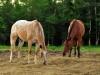 2011-08-05-42272.jpg