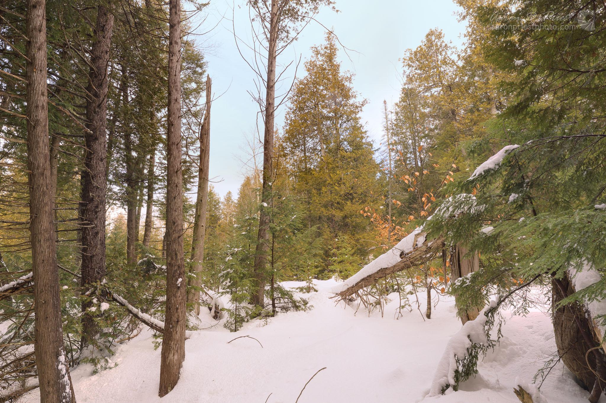 2013-01-20-109107-3 Woods.jpg