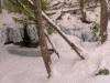 2013-01-20-109107-2 Brook.jpg