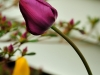 2011-05-21-25187.jpg